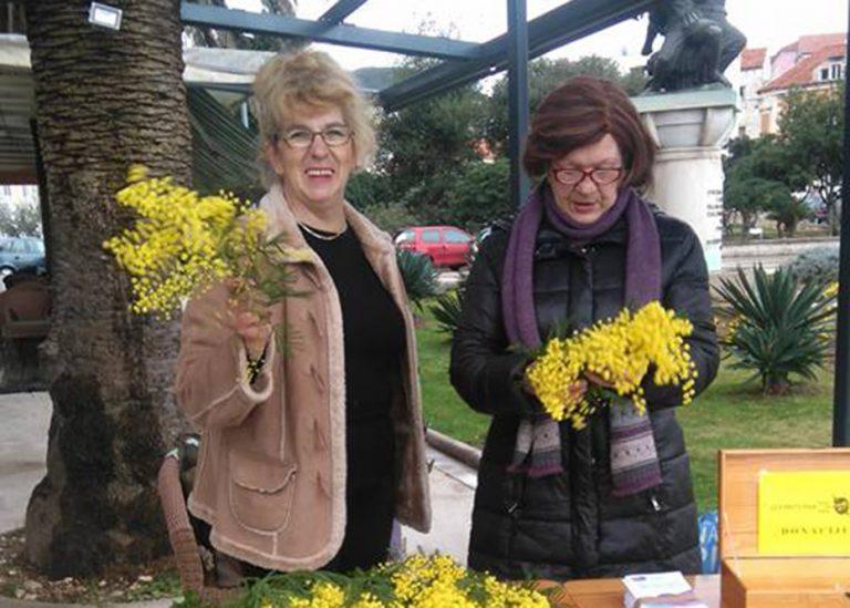 Dan mimoza u Veloj Luci