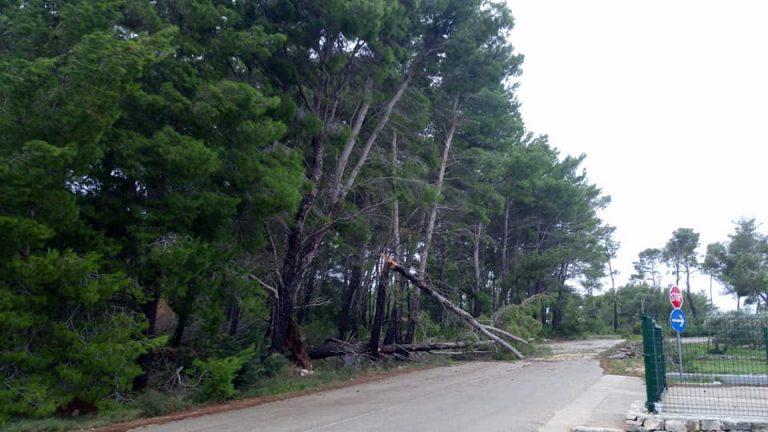 U predjelu Giča na prometnici srušeno nekoliko stabala